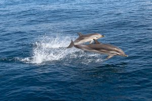 Summer Dolphin & Nature Cruise
