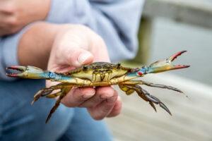 AM Crabbing