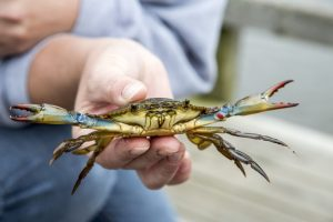 Summer Fishing and Crabbing on the Avalon Lady