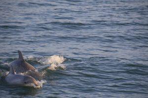 Dolphin & Nature Cruises